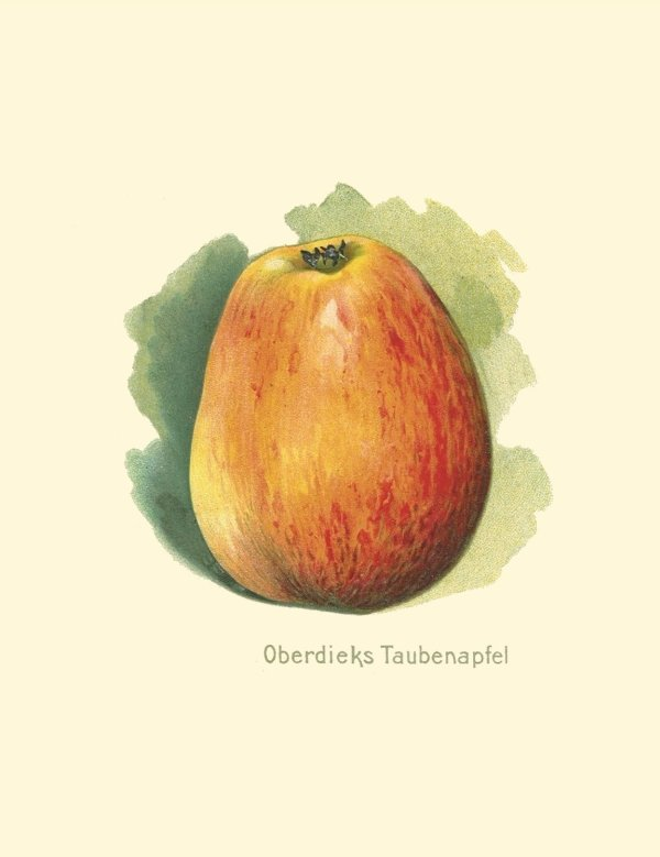 Obstdiecks Taubenapfel